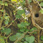 Cornish wildlife and birdlife