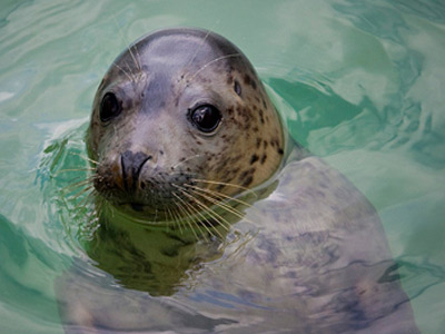 seal-santuary