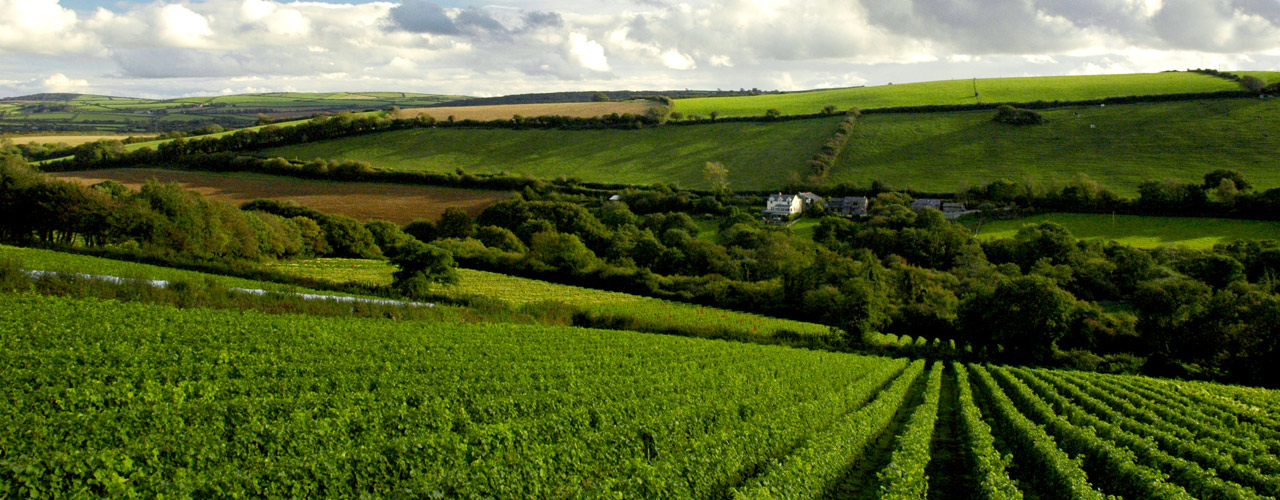 butterwell-farm-from-camel-valley-vineyards