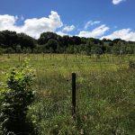 woodland-cornwall