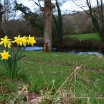 Spring flowers UK