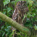 Beautiful British wildlife