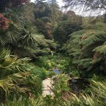Tropical gardens Cornwall