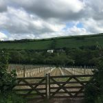 Camel Valley Vineyards English wine