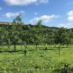 Create woodland UK