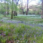 Ancient woodland in Cornwall