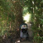 Japanese bamboo gardens Cornwall