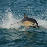 sea life off the Cornish coast