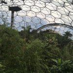 Eden's canopy walkway