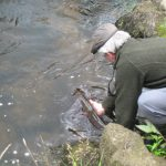 Fly fishing in Cornwall
