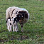 farm stay in Cornwall