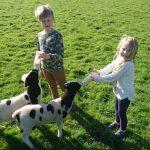 Family farm holiday Cornwall