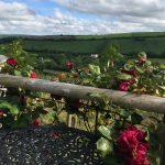 Visit Butterwell Farm Cornwall