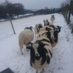 Winter at Butterwell Farm