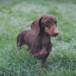 Cottages for dogs in Cornwall